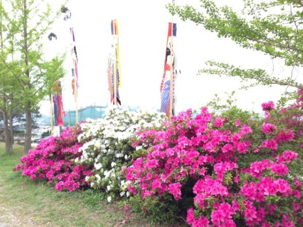 つつじ祭り画像4