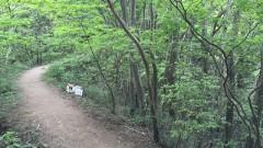 一本松公園(昭和の森・宇美町)から宝満山へ1
