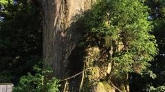 森林セラピー篠栗 荒田高原のあじさいロード~若杉山登山2